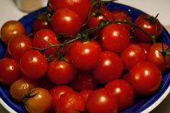 Pomodori freschi della vite immagine stock libera da diritti