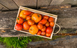 Pomodori freschi di eco Immagini Stock Libere da Diritti