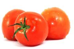 Pomodori freschi isolati su bianco Immagini Stock Libere da Diritti
