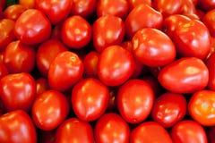 Pomodori freschi nel servizio Fotografia Stock Libera da Diritti