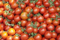 Pomodori freschi rossi Un mucchio dei pomodori Azienda agricola di agricoltura del mercato del vassoio di estate in pieno dei pom Immagini Stock Libere da Diritti