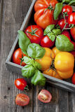 Pomodori freschi in scatola di legno Immagine Stock Libera da Diritti