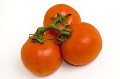 Pomodori freschi su bianco   Immagine Stock