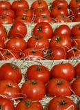 Pomodori freschi su un basamento del mercato dell'azienda agricola fotografie stock libere da diritti