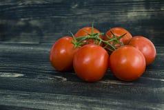 Pomodori freschi su una filiale fotografia stock libera da diritti