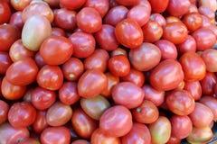 Pomodori freschi sui precedenti verdi della colza Fotografie Stock