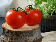 Pomodori freschi sui precedenti verdi della colza fotografia stock