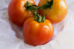 Pomodori freschi sul fondo del Libro Bianco Immagine Stock Libera da Diritti