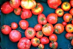 Pomodori freschi sulla vita verde del paese del panno Fotografie Stock Libere da Diritti