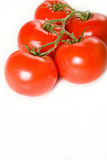 Pomodori freschi sulla vite Immagine Stock Libera da Diritti