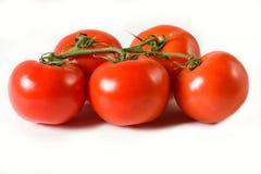 Pomodori freschi sulla vite Fotografia Stock Libera da Diritti
