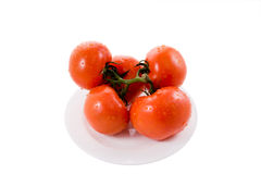 Pomodori freschi sulla zolla bianca Fotografie Stock