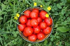 Pomodori freschi in una ciotola Immagini Stock