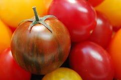 Pomodori gastronomici Fotografia Stock
