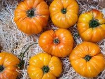 Pomodori gialli del manzo su un mercato degli agricoltori Fotografia Stock Libera da Diritti