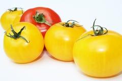 Pomodori gialli e rossi Fotografia Stock