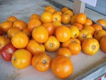 Pomodori gialli maturi Fotografia Stock Libera da Diritti