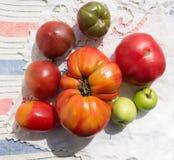Pomodori increspati di cimelio Fotografie Stock Libere da Diritti