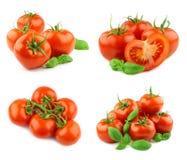 Pomodori isolati Immagine Stock Libera da Diritti