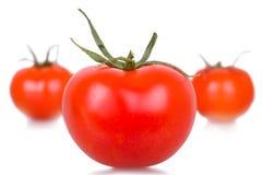Pomodori isolati maturi Immagine Stock