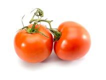 Pomodori isolati su priorità bassa bianca Fotografie Stock