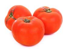 Pomodori isolati su priorità bassa bianca immagini stock libere da diritti