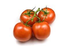 Pomodori legati Fotografie Stock