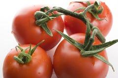 Pomodori maturati vite. Immagine Stock Libera da Diritti