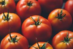 Pomodori maturi Fotografie Stock