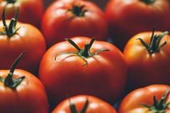 Pomodori maturi Immagini Stock