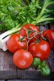 Pomodori maturi con le erbe Fotografie Stock