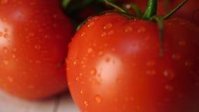 Pomodori maturi con le gocce di acqua sulla tavola Pomodori rossi maturi appetitosi con i gambi verdi e gocce di acqua su di legn stock footage