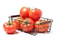 Pomodori maturi freschi Immagini Stock