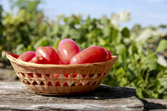 Pomodori maturi freschi Immagine Stock