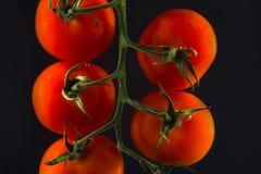 Pomodori maturi rossi su un brunch Immagini Stock