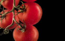 Pomodori maturi rossi su un brunch Fotografia Stock