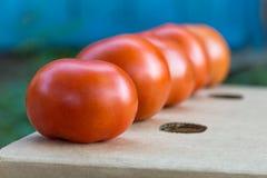 Pomodori maturi su una scatola di cartone in una fila Fotografie Stock Libere da Diritti