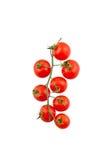 Pomodori maturi sulla vite Fotografie Stock