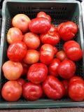 pomodori molto rossi ed appetitosi fotografie stock libere da diritti