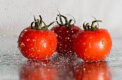 Pomodori nelle gocce immagini stock