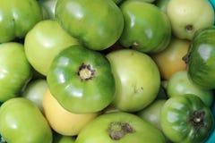 Pomodori non maturi crudi verdi Fotografia Stock