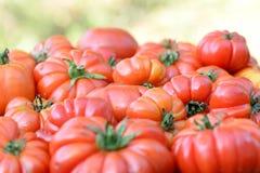 Pomodori organici Fotografia Stock Libera da Diritti