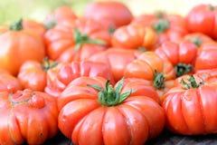 Pomodori organici Immagini Stock