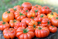 Pomodori organici Fotografie Stock