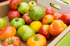 Pomodori organici al mercato del ` degli agricoltori Fotografia Stock