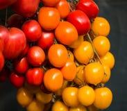 Pomodori organici di recente selezionati Fotografia Stock Libera da Diritti