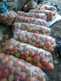 Pomodori per vendere Immagine Stock
