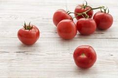Pomodori Ramo dei pomodori Immagini Stock Libere da Diritti