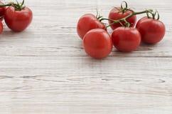 Pomodori Ramo dei pomodori Immagine Stock Libera da Diritti