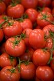 Pomodori rossi fotografie stock libere da diritti